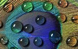 Gevelcrème 25 - 25% werkzame stof (12,5 liter)_10